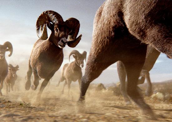 RAM - Roll Rams Roll