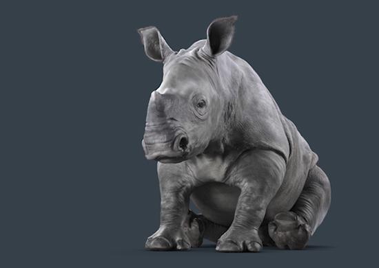 Rhino Carpet